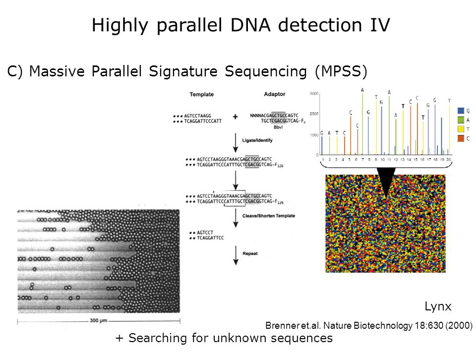 C) Massive Parallel Signature Sequencing (MPSS) + Searching for unknown sequences Lynx Brenner et.al. Nature Biotechnology 18:630 (2000) Highly parall