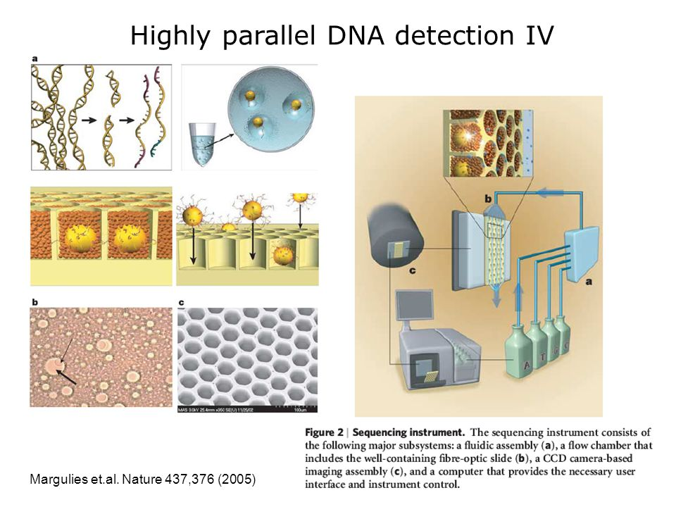 Margulies et.al. Nature 437,376 (2005) Highly parallel DNA detection IV