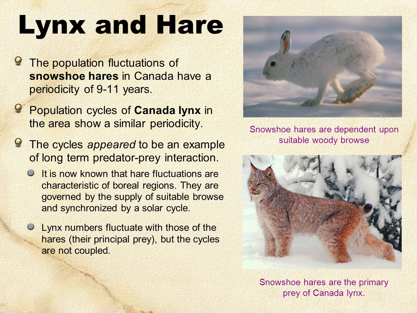 The population fluctuations of snowshoe hares in Canada have a periodicity of 9-11 years. Population cycles of Canada lynx in the area show a similar