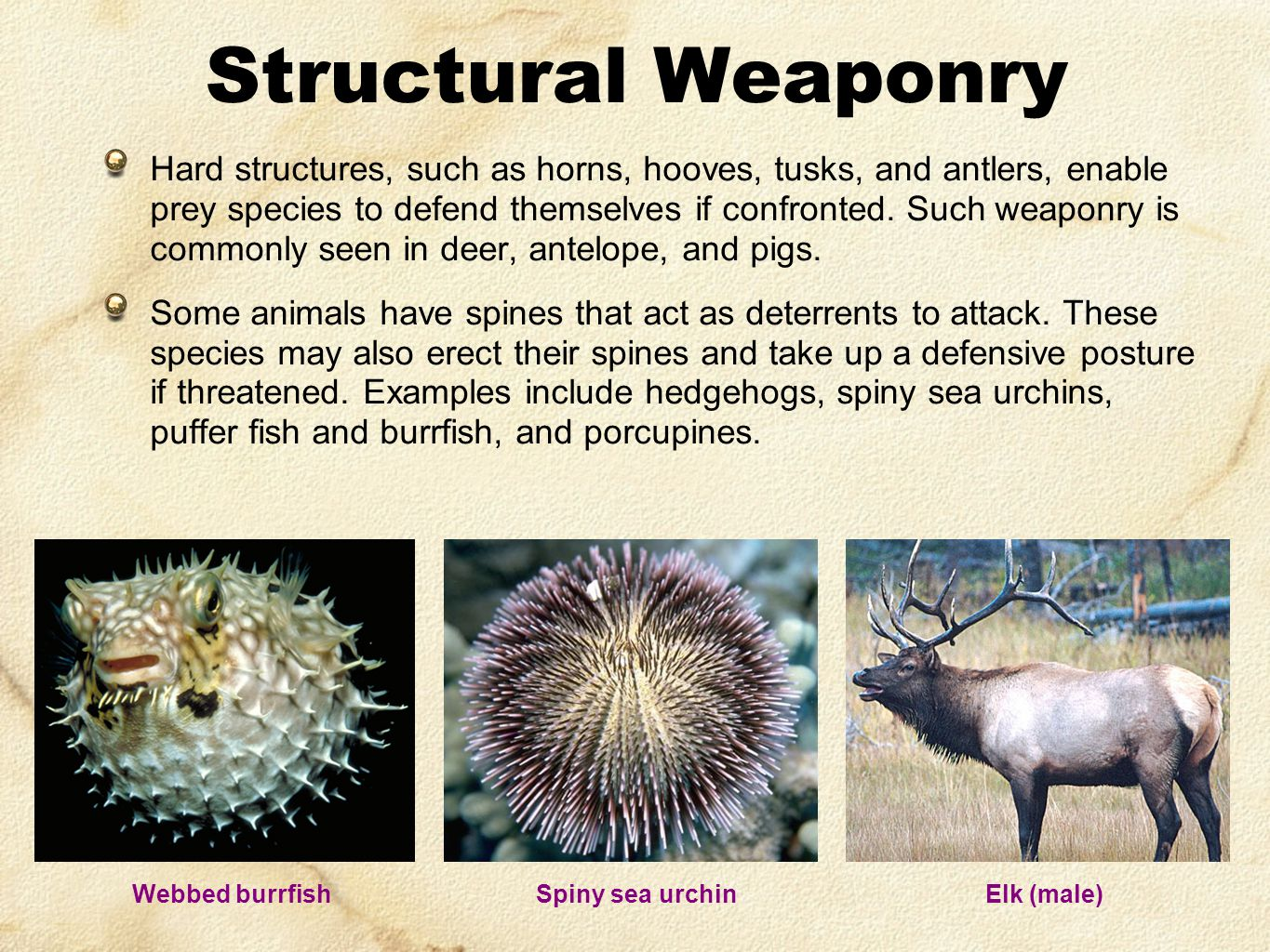 Hard structures, such as horns, hooves, tusks, and antlers, enable prey species to defend themselves if confronted. Such weaponry is commonly seen in