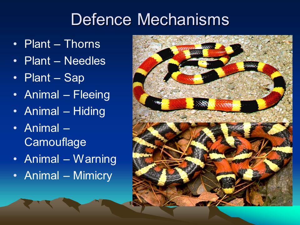 Defence Mechanisms Plant – Thorns Plant – Needles Plant – Sap Animal – Fleeing Animal – Hiding Animal – Camouflage Animal – Warning Animal – Mimicry