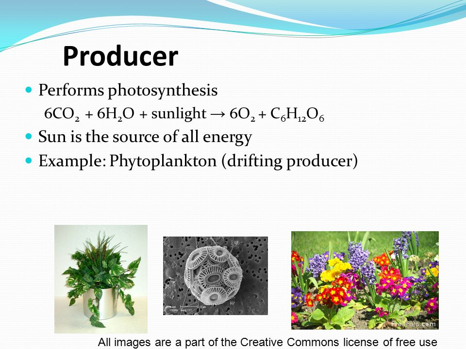 Producer Performs photosynthesis 6CO 2 + 6H 2 O + sunlight → 6O 2 + C 6 H 12 O 6 Sun is the source of all energy Example: Phytoplankton (drifting prod