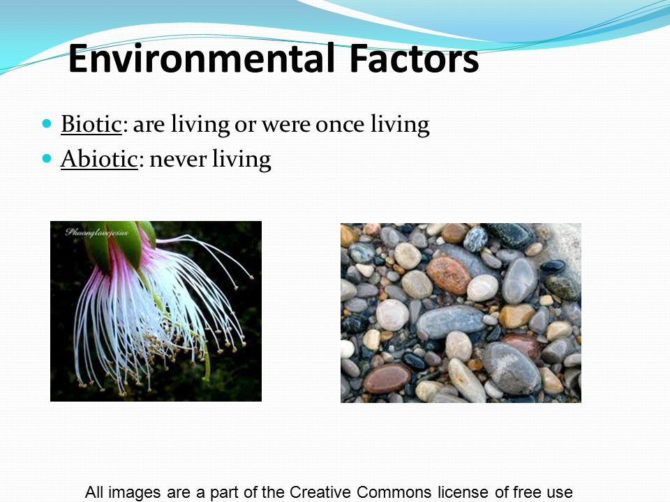 Environmental Factors Biotic: are living or were once living Abiotic: never living All images are a part of the Creative Commons license of free use