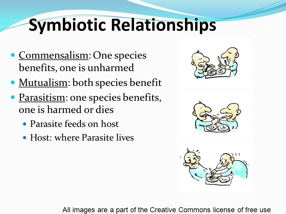 Food Chain A series of producers and consumers – step by step up the food pyramid All images are a part of the Creative Commons license of free use