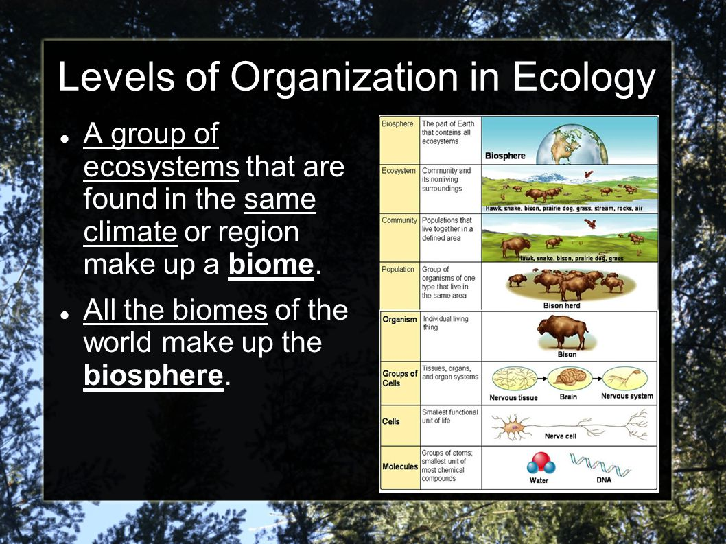 Levels of Organization in Ecology A group of ecosystems that are found in the same climate or region make up a biome. All the biomes of the world make