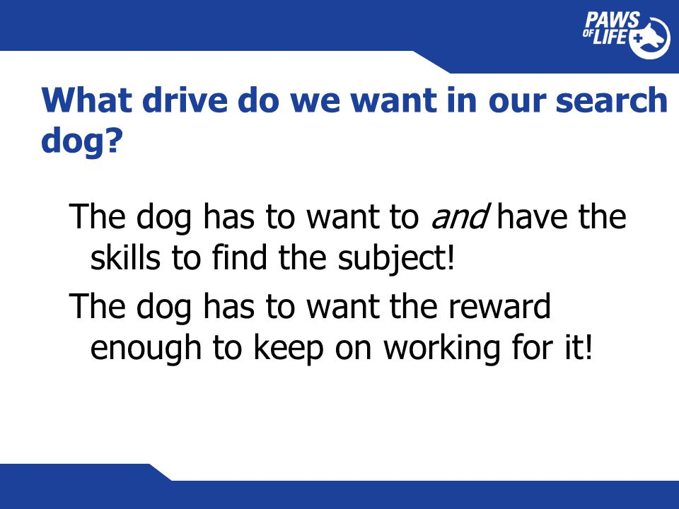 What drive do we want in our search dog.