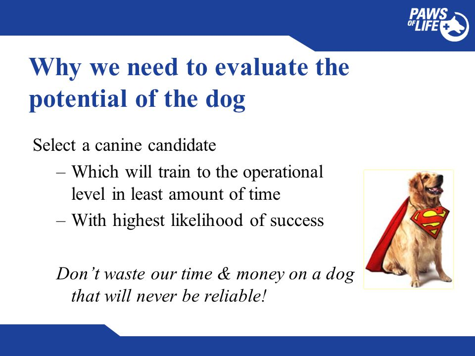 Why we need to evaluate the potential of the dog Select a canine candidate –Which will train to the operational level in least amount of time –With highest likelihood of success Don't waste our time & money on a dog that will never be reliable!