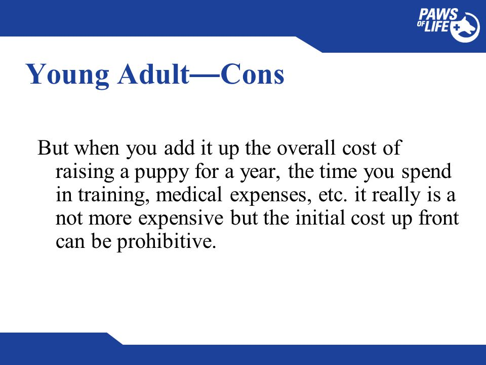 Young Adult — Cons But when you add it up the overall cost of raising a puppy for a year, the time you spend in training, medical expenses, etc.