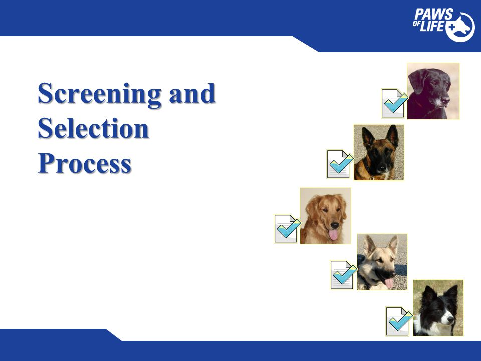 Screening and Selection Process