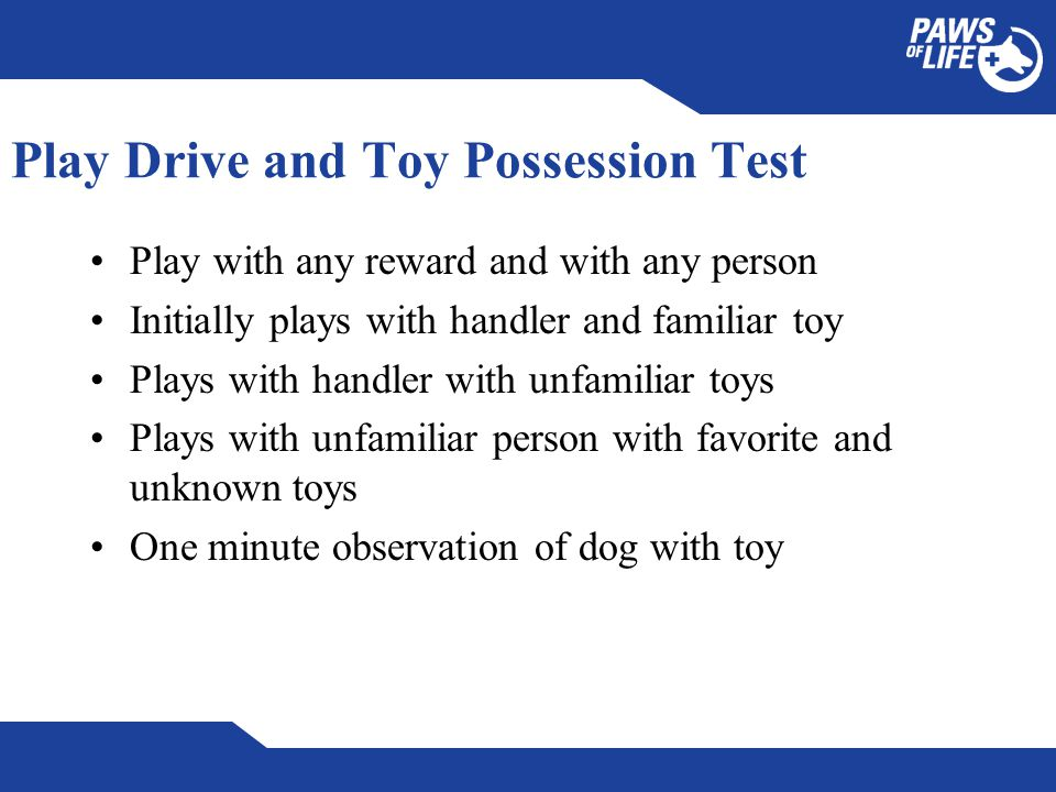 Play Drive and Toy Possession Test Play with any reward and with any person Initially plays with handler and familiar toy Plays with handler with unfamiliar toys Plays with unfamiliar person with favorite and unknown toys One minute observation of dog with toy
