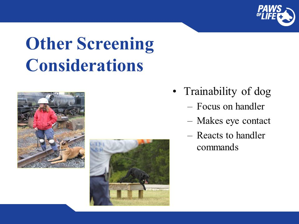 Other Screening Considerations Trainability of dog –Focus on handler –Makes eye contact –Reacts to handler commands