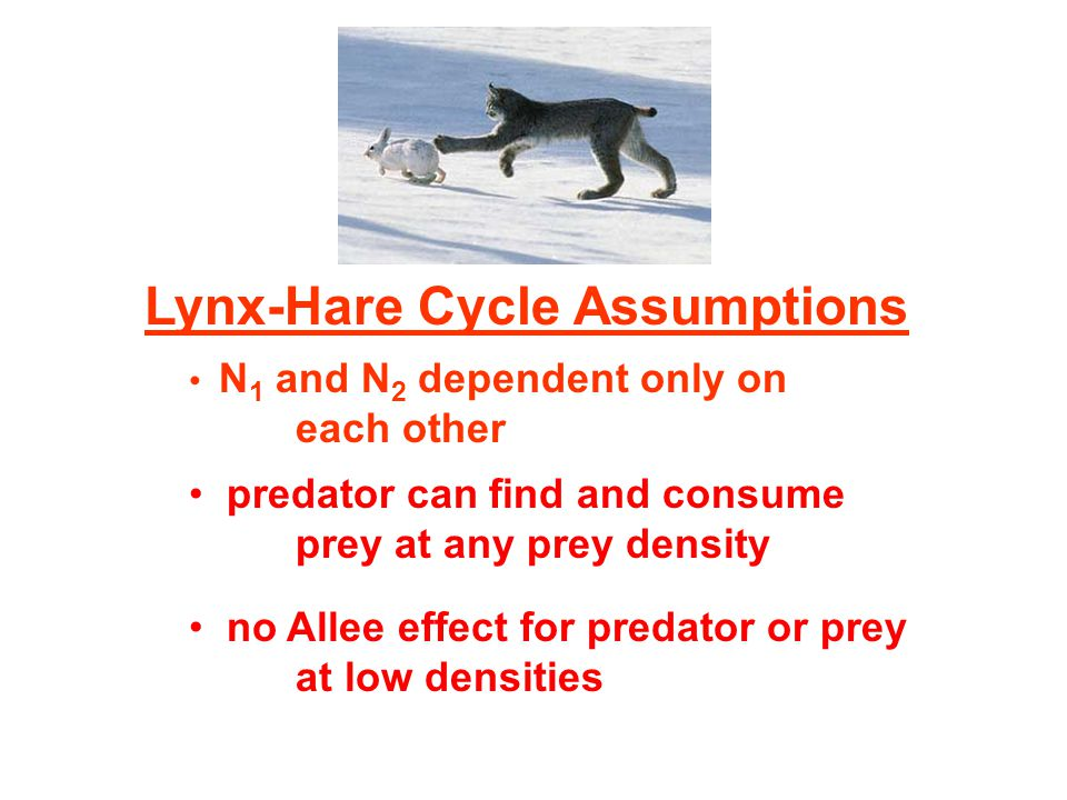 Lynx-Hare Cycle Assumptions N 1 and N 2 dependent only on each other predator can find and consume prey at any prey density no Allee effect for predator or prey at low densities