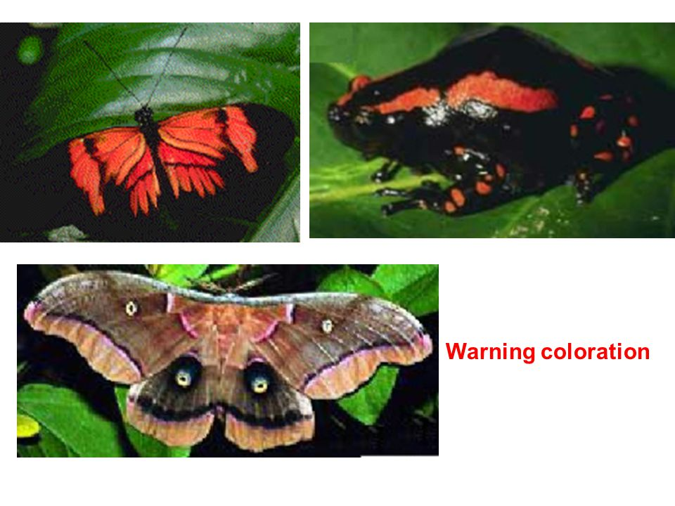 Warning coloration