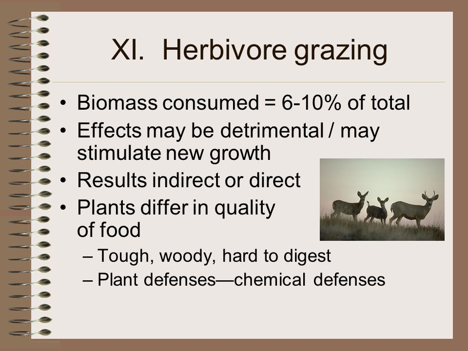 XI. Herbivore grazing Biomass consumed = 6-10% of total Effects may be detrimental / may stimulate new growth Results indirect or direct Plants differ