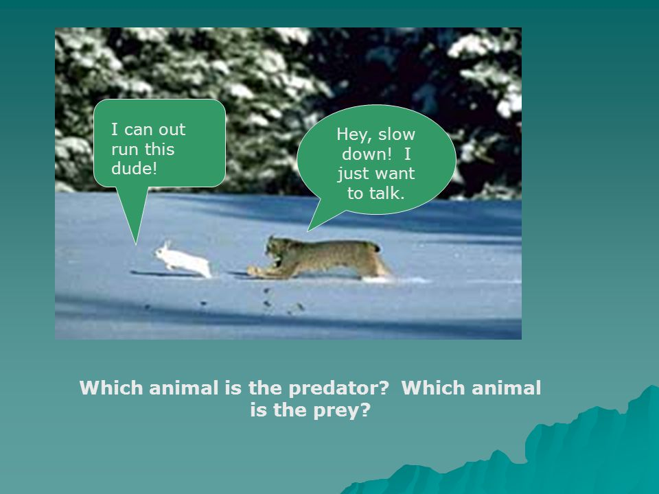 Predator and Prey  Who eats who.  Prey- An organism that is killed and eaten by another organism.