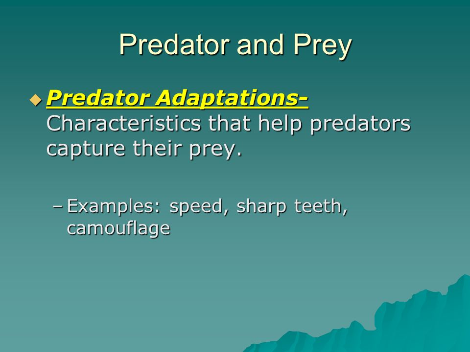Which animal is the predator. Which animal is the prey.
