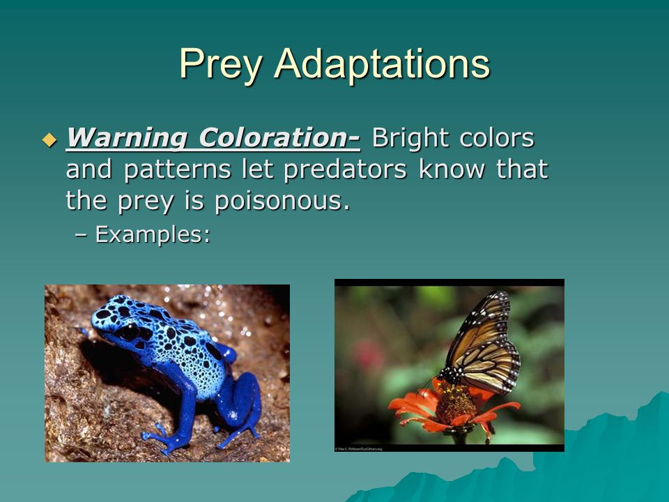 Prey Adaptations  Defensive Chemicals: Release a harmful/deadly chemical.