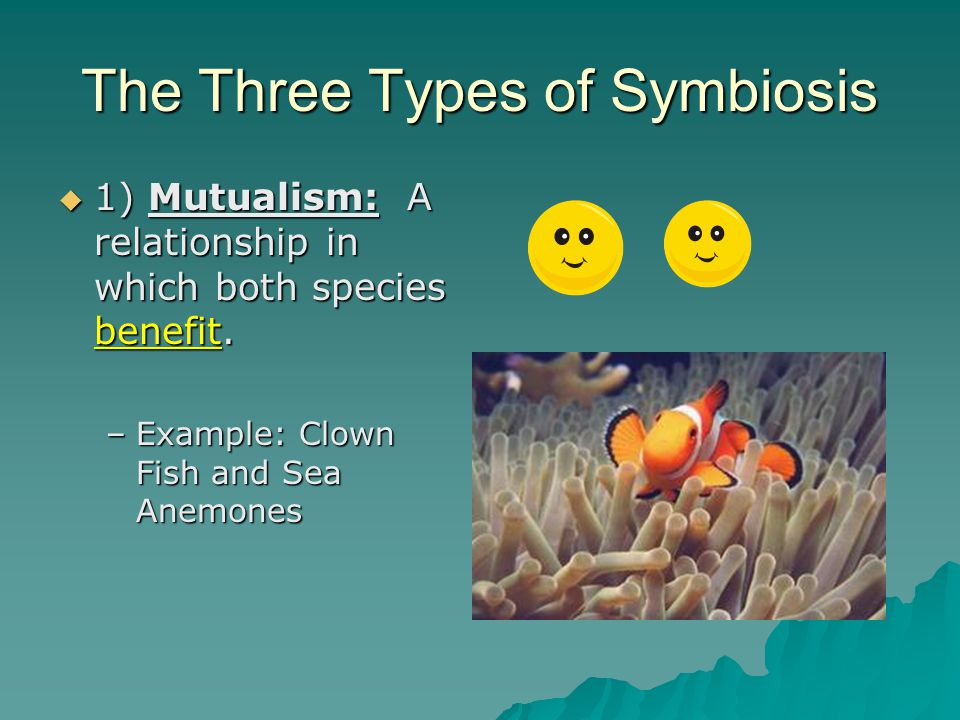 Symbiosis  Symbiosis- A close, long-term association between two or more species.