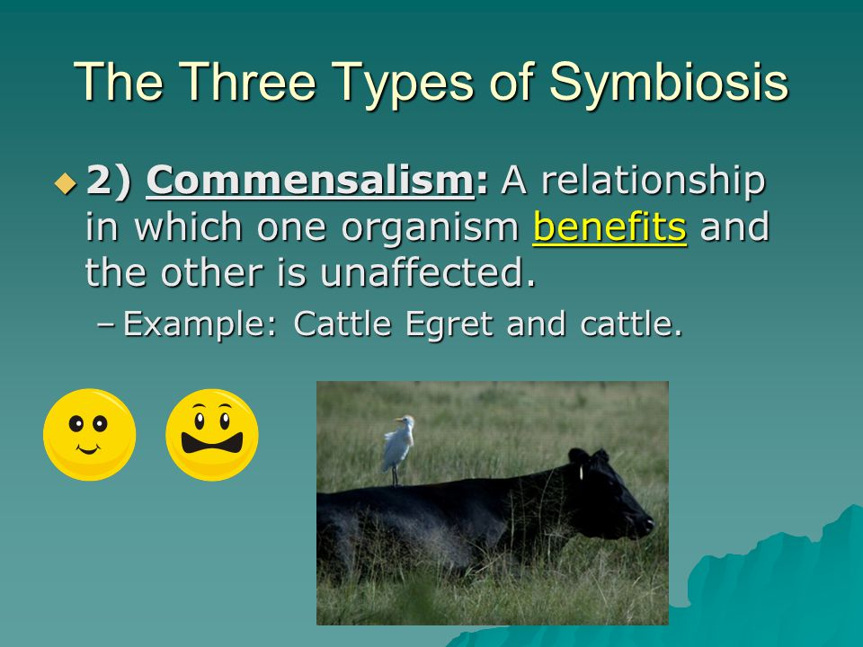 The Three Types of Symbiosis  1) Mutualism: A relationship in which both species benefit.