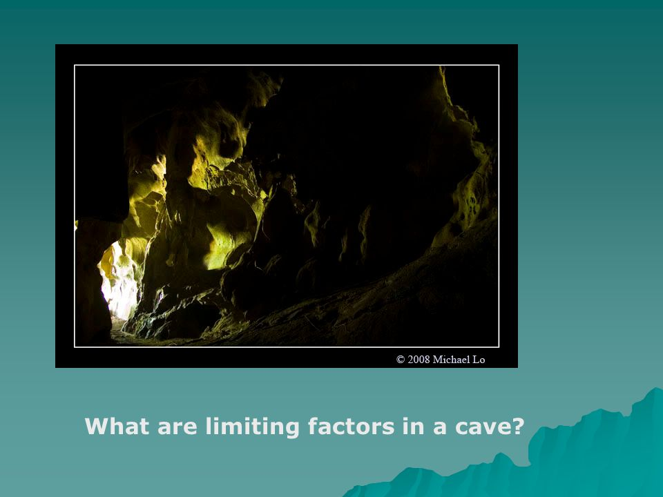 What are limiting factors in the jungle?