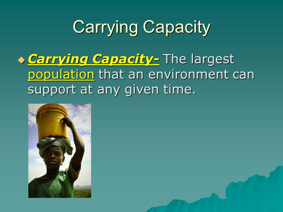 Carrying Capacity Could this guy possible carry any more