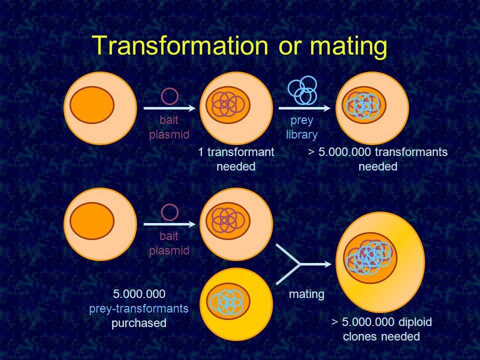 Transformation or mating bait plasmid prey library 1 transformant needed > 5.000.000 transformants needed bait plasmid 5.000.000 prey-transformants pu