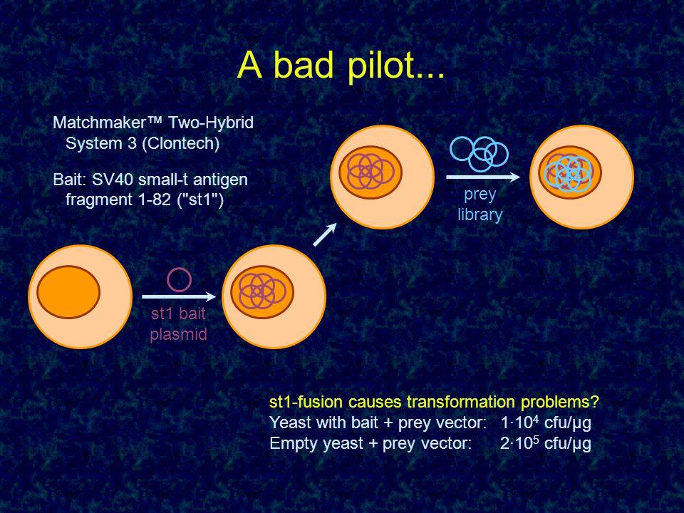 A bad pilot... st1 bait plasmid prey library Matchmaker™ Two-Hybrid System 3 (Clontech) Bait: SV40 small-t antigen fragment 1-82 (