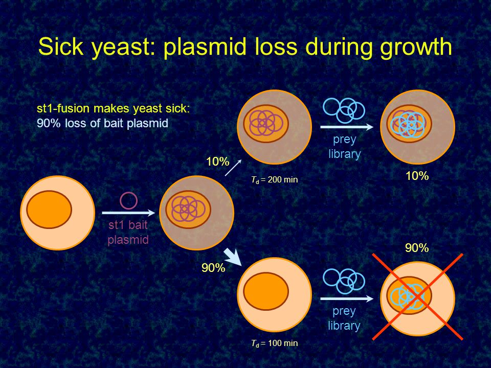 Sick yeast: plasmid loss during growth prey library prey library 10% 90% 10% 90% st1-fusion makes yeast sick: 90% loss of bait plasmid st1 bait plasmi