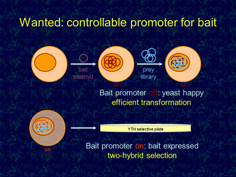 Wanted: controllable promoter for bait bait plasmid prey library Bait promoter off: yeast happy efficient transformation Bait promoter on: bait expres