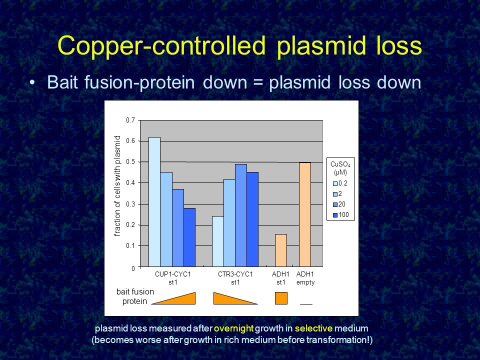 Copper-controlled plasmid loss Bait fusion-protein down = plasmid loss down 0 0.1 0.2 0.3 0.4 0.5 0.6 0.7 CUP1-CYC1 st1 CTR3-CYC1 st1 ADH1 st1 ADH1 empty 0.2 2 20 100 CuSO 4 (µM) fraction of cells with plasmid bait fusion protein plasmid loss measured after overnight growth in selective medium (becomes worse after growth in rich medium before transformation!)