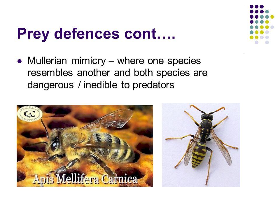 Prey defences cont….