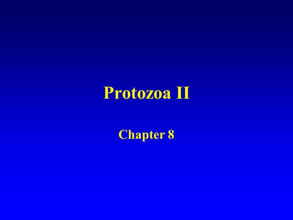 Protozoa II Chapter 8