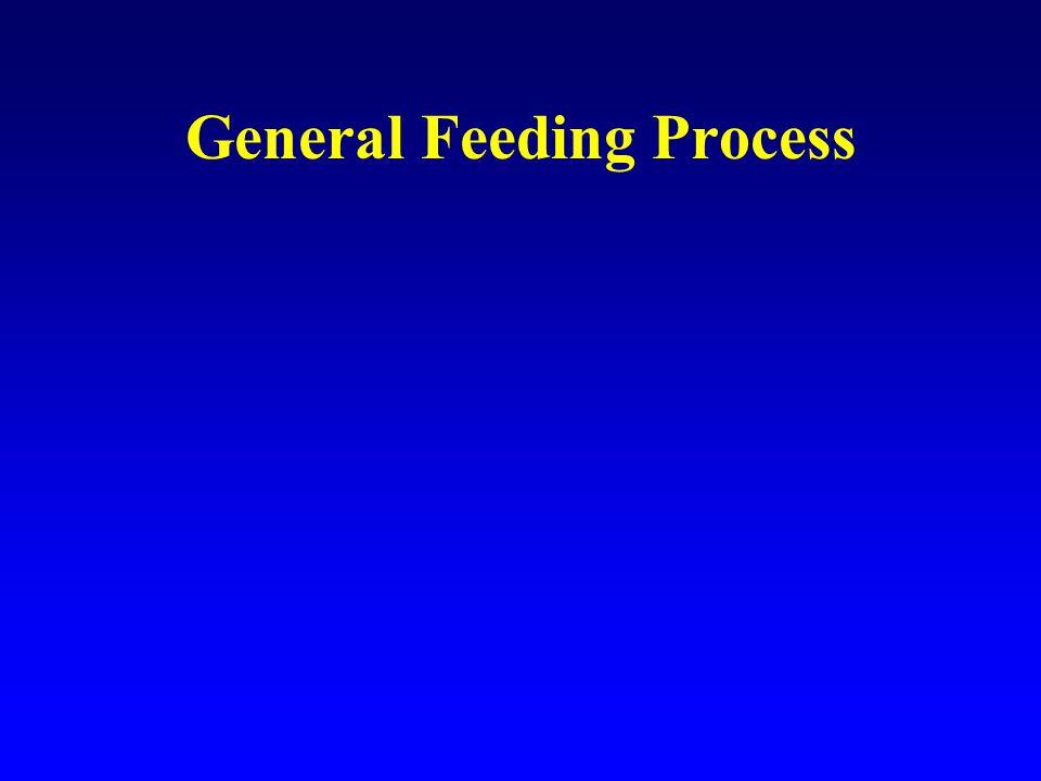 General Feeding Process