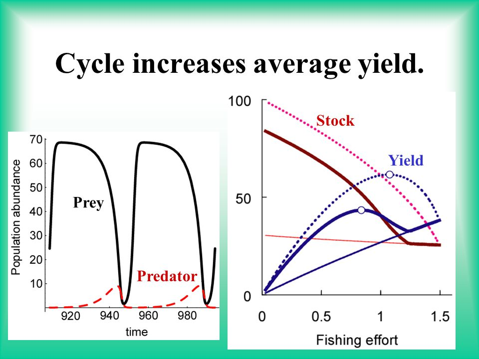 20 Cycle increases average yield. Stock Yield Prey Predator