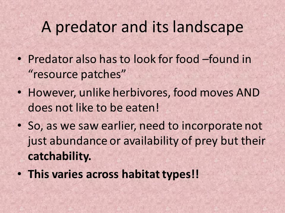 A predator and its landscape Predator also has to look for food –found in resource patches However, unlike herbivores, food moves AND does not like to be eaten.