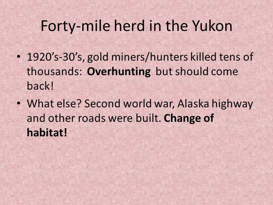Forty-mile herd in the Yukon 1920's-30's, gold miners/hunters killed tens of thousands: Overhunting but should come back.