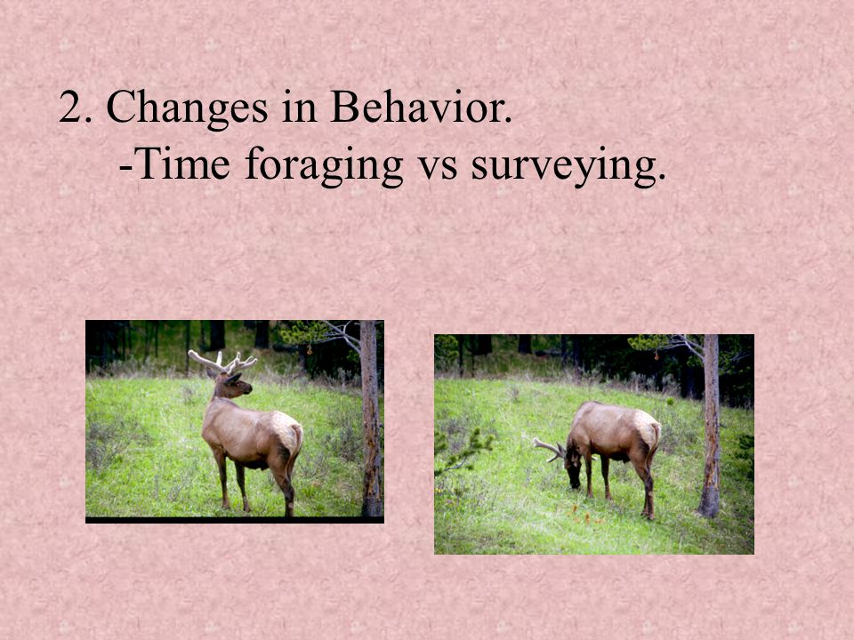 2. Changes in Behavior. -Time foraging vs surveying.