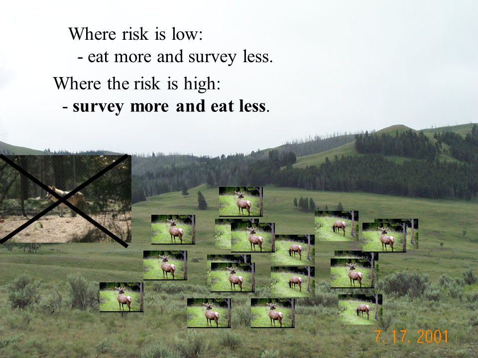 Where risk is low: - eat more and survey less. Where the risk is high: - survey more and eat less.