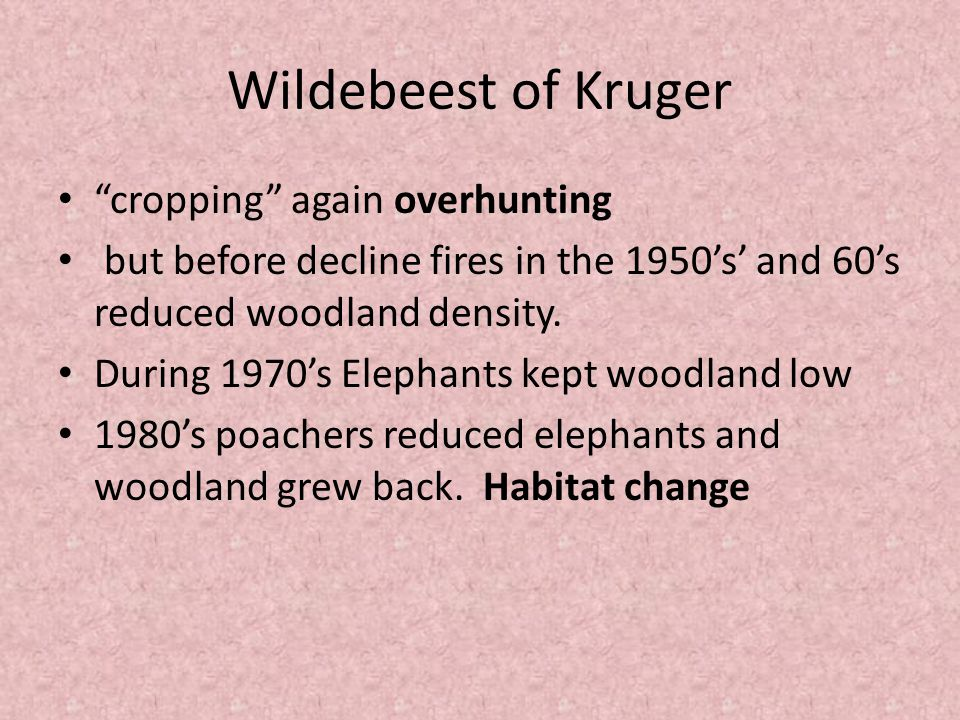 """Wildebeest of Kruger """"cropping"""" again overhunting but before decline fires in the 1950's' and 60's reduced woodland density. During 1970's Elephants k"""