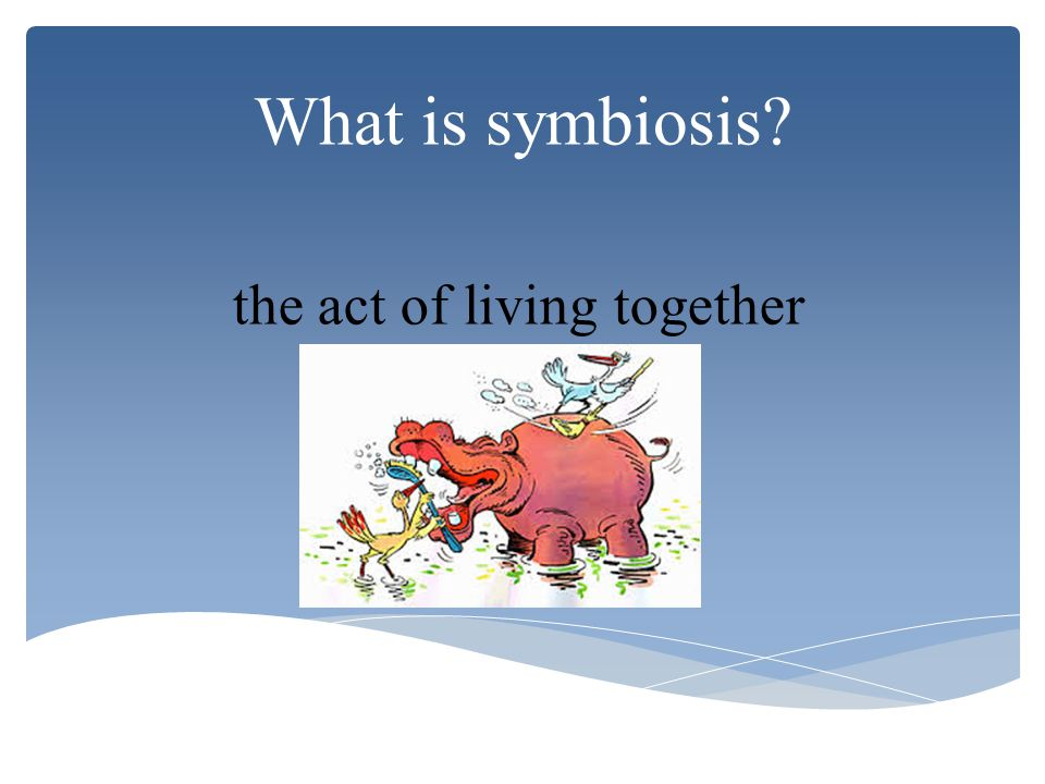 What it means:  Two organisms that live together  Temporarily or for a longer time  At least one of the organisms benefits from the relationship Symbiosis