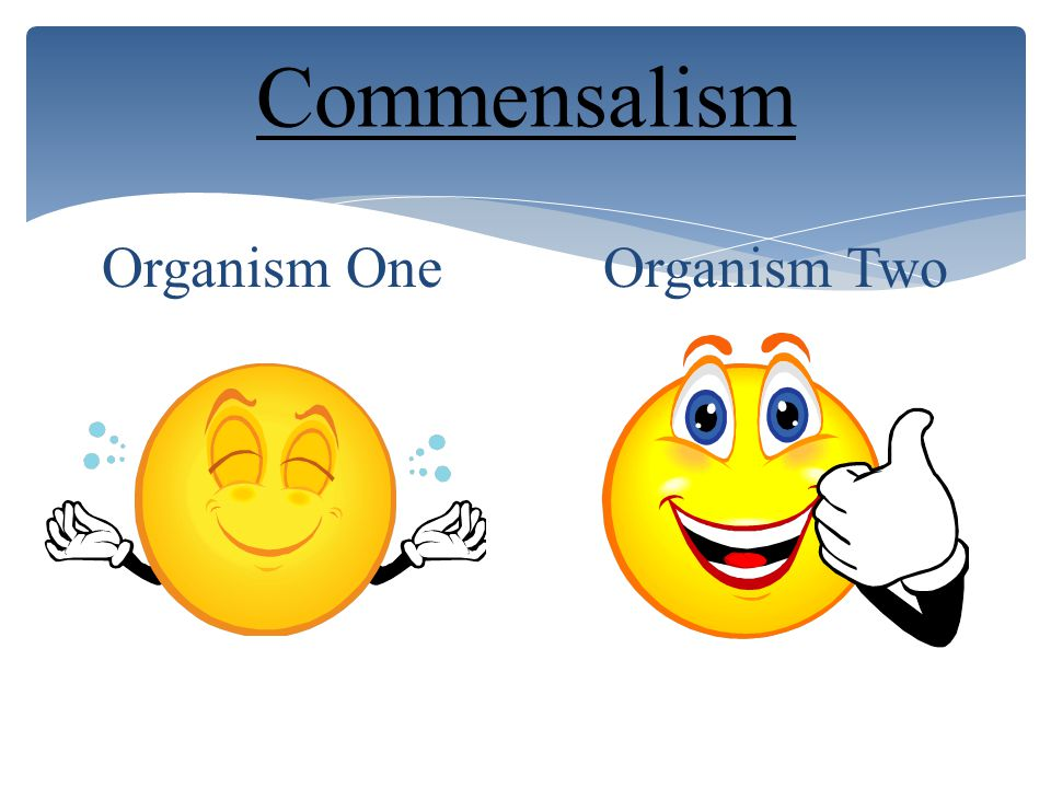Parasitism Organism One Organism Two