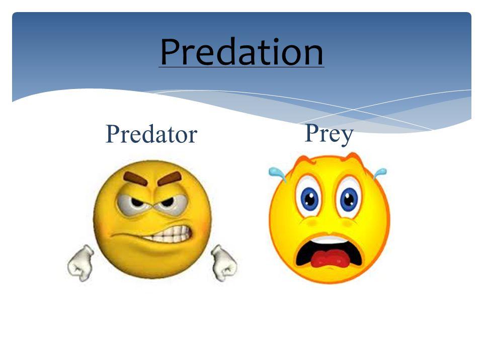Predation Predator Prey
