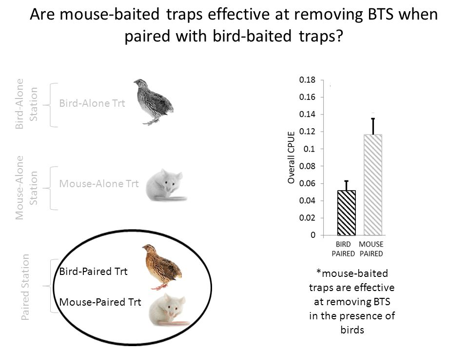 Are mouse-baited traps effective at removing BTS when paired with bird-baited traps? Bird-Alone Trt Mouse-Alone Trt Mouse-Paired Trt Bird-Paired Trt P