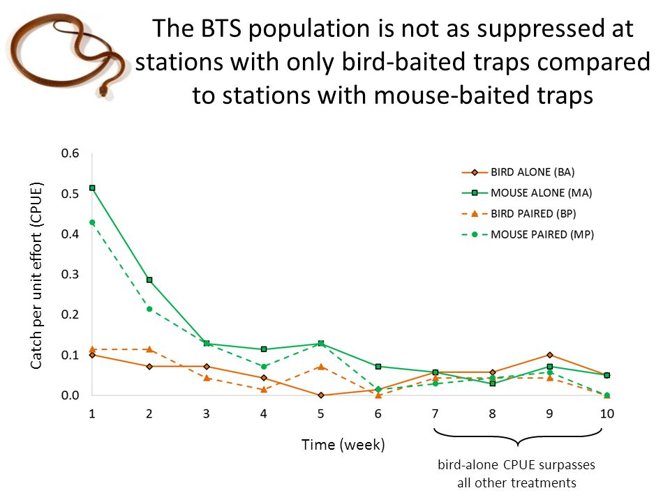 bird-alone CPUE surpasses all other treatments The BTS population is not as suppressed at stations with only bird-baited traps compared to stations wi
