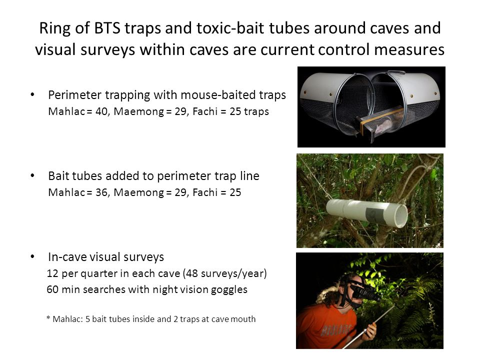 Ring of BTS traps and toxic-bait tubes around caves and visual surveys within caves are current control measures Perimeter trapping with mouse-baited traps Mahlac = 40, Maemong = 29, Fachi = 25 traps Bait tubes added to perimeter trap line Mahlac = 36, Maemong = 29, Fachi = 25 In-cave visual surveys 12 per quarter in each cave (48 surveys/year) 60 min searches with night vision goggles * Mahlac: 5 bait tubes inside and 2 traps at cave mouth