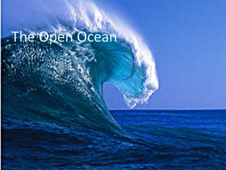 Open Ocean: Physical Characteristics One of the more complex and varied ecosystems, the open ocean is characterized by several distinct characteristics, as listed below: The temperature varies for such a diverse ecosystem, especially since the ocean involves several zones, some of which are not reached by sunlight and therefore have extremely low temperatures.