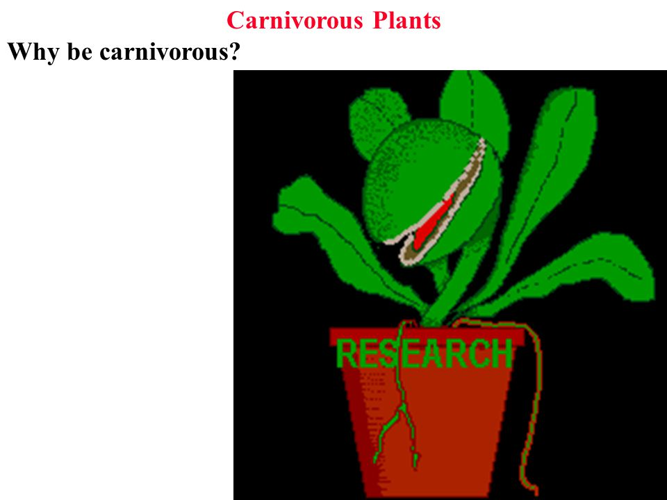 Carnivorous Plants How to become carnivorous? 1: catch prey