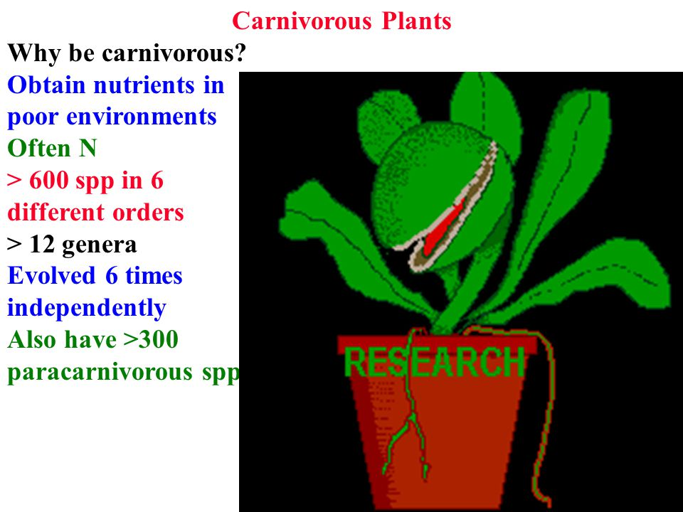 Carnivorous Plants Why be carnivorous.