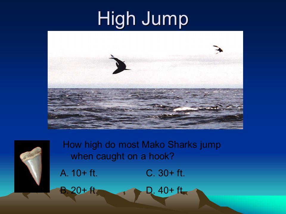 5) Mako Shark Description (size) Why Dangerous / Attack Report Sea Zone Common Locations Prey Tooth Design