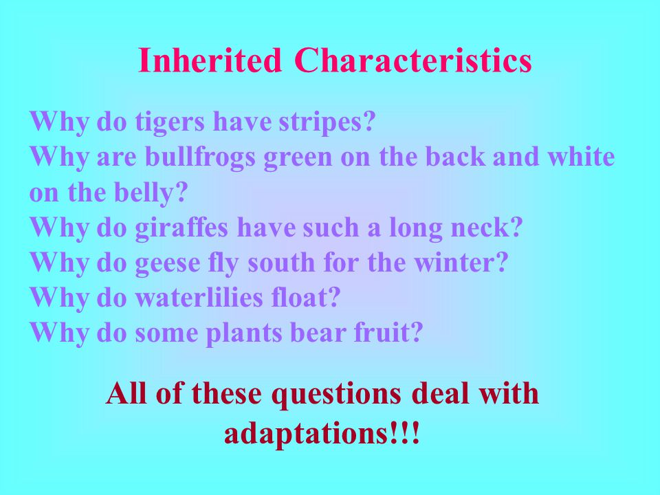 Inherited Characteristics Why do tigers have stripes.